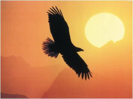 eagle straddle tecnica di trading opzioni binarie