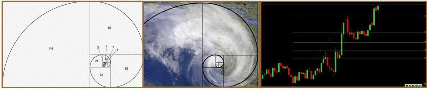 La sequenza di Fibonacci in natura e nei grafici opzioni binarie