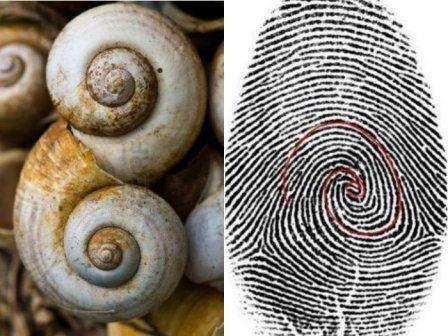 La natura utilizza la sequenza dei numeri di Fibonacci per le sue creazioni.